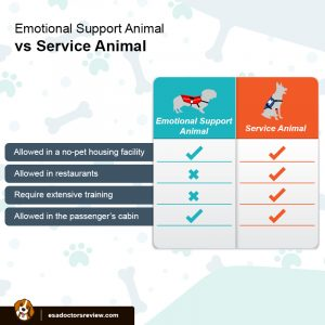 ESA vs Service Animals
