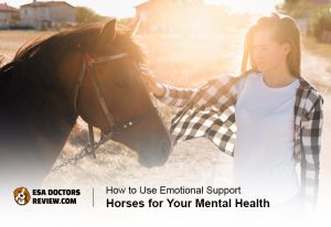 emotional support horses