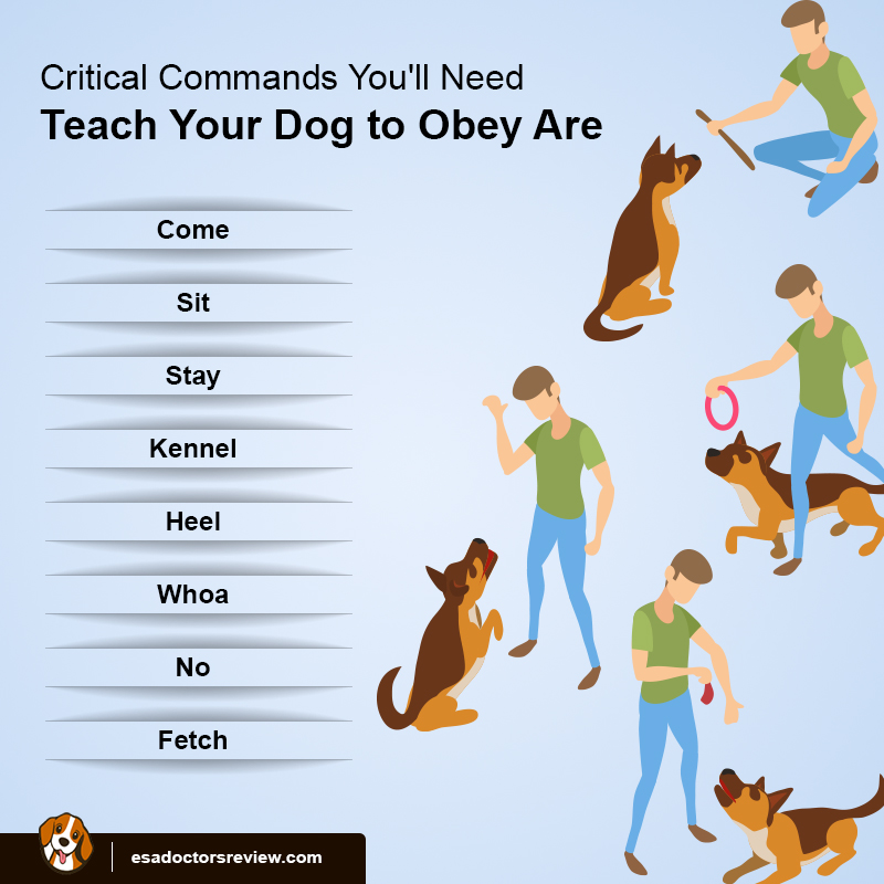 Commands for dogs