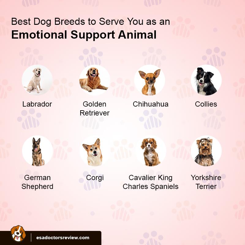 ESA Dog