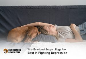 Emotional Support Dogs