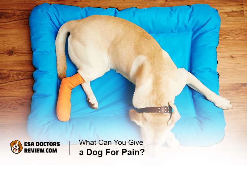Dogs in Pain